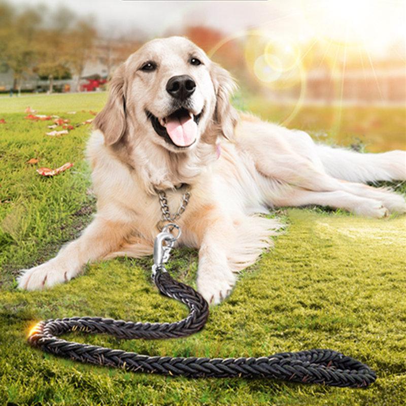 Como treinar cães golden retriever golden retri Como treinar