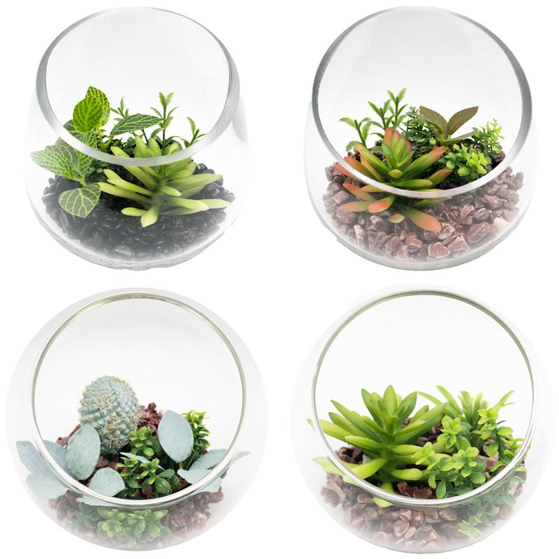 Plantas suculentas artificiais com o vaso decorativo da exposição do globo do tabletop de vidro