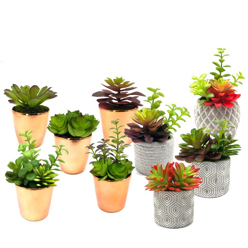 Mini Plantas Suculentas Artificiais Com Panela Decorativo Globo de Mesa Display Home Decor